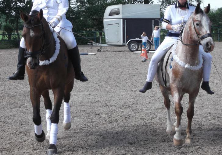 Kostuums voor paarden