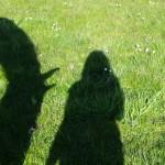 foto-schaduw-paarden 07